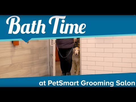 Puppy Bath Time At PetSmart Grooming Salon