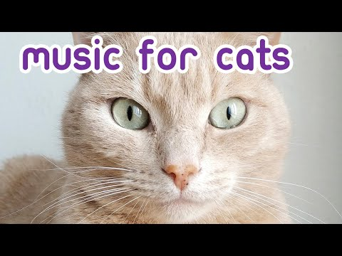 NEW Relaxing Cat Music - 6 Hours of EXTREMELY Soothing Cat Music!