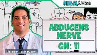 Neurology | Abducens Nerve | Cranial Nerve VI