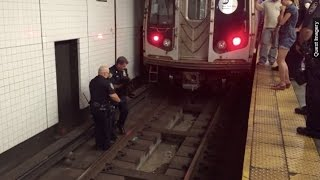 Cat Wreaks Havoc On New York City Metro System - Newsy