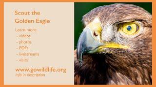 Wildlife Ambassador Biography: Scout