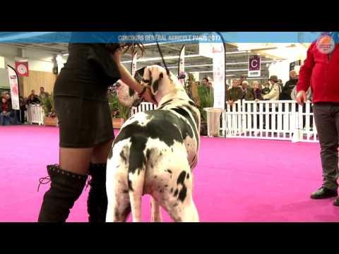 Voir la vidéo : Ring Canins du 27 février 2017, partie 4
