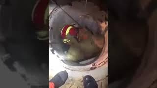 Собака благодарит пожарного за её спасение (классные видео с животными, позитив, собака, пёс)