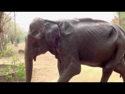 Love & Bananas: An Elephant Story online