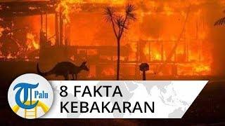 8 Fakta Kebakaran di Australia 24 Orang Tewas dan Sekitar 500 Juta Satwa Mati
