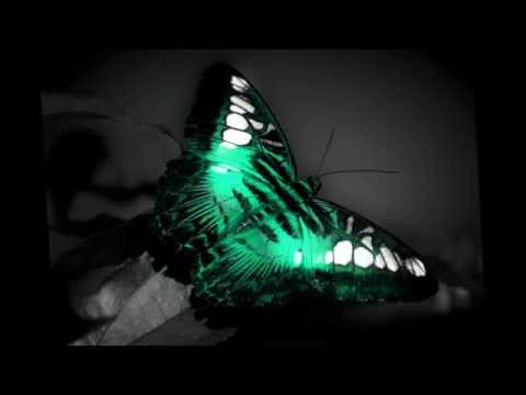 BUTTERFLY-Vocal Trance