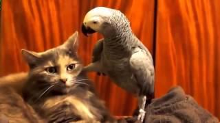 Кот и попугай прикол ржака дружба котэ