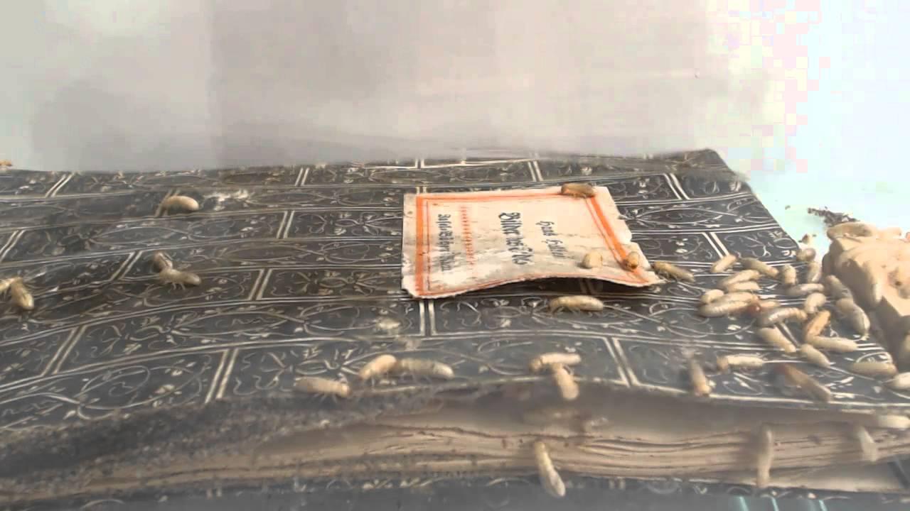 Ein Termitenbuch von Sophie Lokatis und Julia Alice Treptow