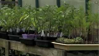 Starting Your Own Garden