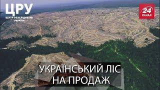 ЦРУ. Вкрадений ліс: заради кого і чого нещадно рубають Карпатські ліси