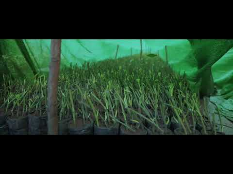 Rooted cuttings standard method