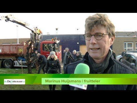 VIDEO | Vijftig perenbomen van Marinus Huijsmans krijgen een nieuwe plek in de dorpen