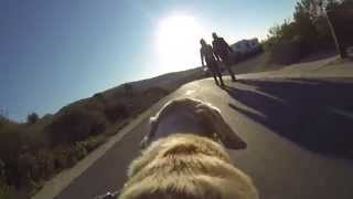 preview picture of video 'GoPro Fetch Dog Mount: Frisbee at Crystal Cove State Beach'