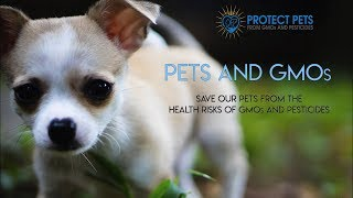 Protect Your Pets From GMOs and Pesticides