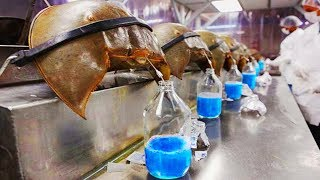 15 Most Expensive Liquids In The World!