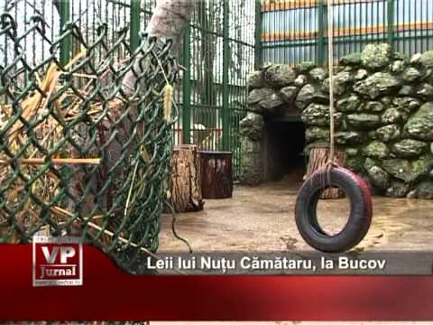 Leii lui Nuțu Cămătaru, la Bucov