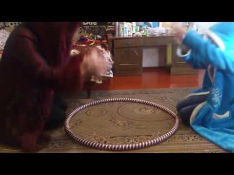 Как лечение киста печень
