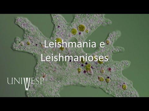 Effetti papilloma virus nell uomo