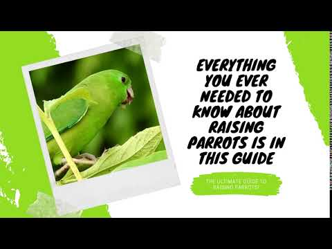 The Ultimate Guide To Raising Parrots!