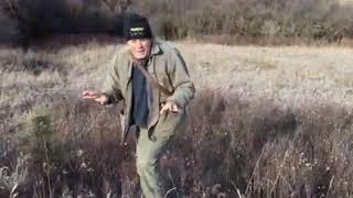 Long-eared Owl Release Video