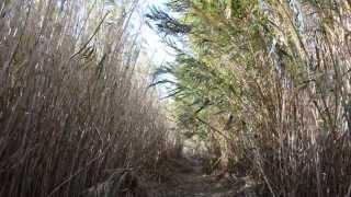 preview picture of video 'Sonido de las cañas. Ruta Río Seco, Pilar de la Horadada'