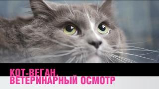 Насколько здоров кот-веган?
