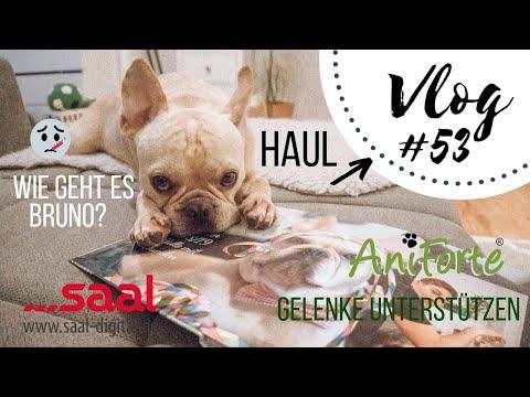 HAUL, GELENKE, GESUNDHEIT, BULLDOGGENPROBLEME - VLOG #53
