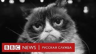 Памяти Грэмпи Кэт 💔