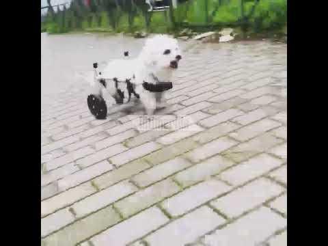 2063f54b19cd iefimerida.gr  Ο Βασίλης Τζίγκουρας φτιάχνει αναπηρικά αμαξίδια για ζώα! 3