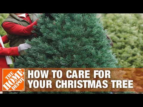 How to Care for Your Christmas Tree - The Home Depot