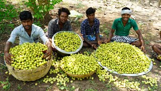 200 kg Indian gooseberry pickle prepared in gooseberry garden | nellikai oorugai