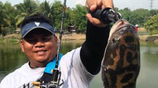 preview picture of video 'Toman Catch and Release Pond, Fish Valley, Semenyih - 26 JUN 2014'