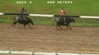 Kaamatan Cup Buffalo Race