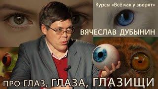"""Вячеслав Дубынин """"Про глаз, глаза, глазищи"""" #2 // курсы юного натуралиста """"Всё как у зверят"""""""