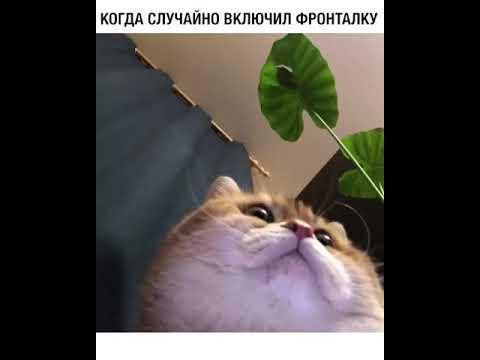 Кот приколист