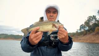 Boat Fishing for Black Bass – Portugal