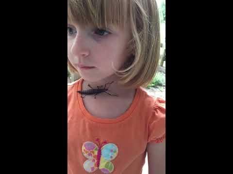 #1 - Striped Stick Bug