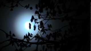 Angelo Branduardi - Notturno (vinyl version, 1975)
