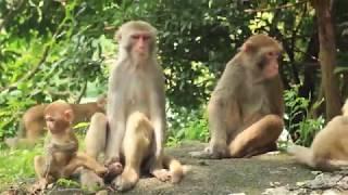 Adventures on Monkey Hill, Hong Kong