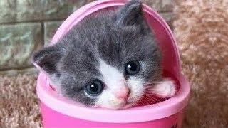 「猫かわいい」 すごくかわいい子猫 - 最も面白い猫の映画 #303