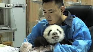 Nanny writing with a lap panda