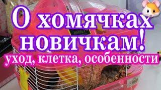 Уход и содержание джунгарского хомячка в домашних условиях
