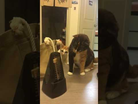 Γάτες φρικάρουν τελείως με τον μετρονόμο
