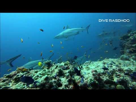Dive Rasdhoo March 2018