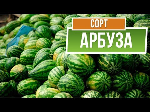 Лучшие сорта арбуза для средней полосы ✔️ Какие Арбузы Посадить в России