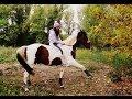 Tuto N°3 ★ Apprendre la jambette a son cheval.
