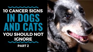 Top 10 Warning Signs of Cancer in Dogs and Cats Part 2: Vlog 82