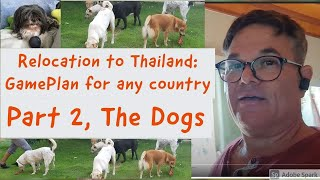 Part 2, The Dogs.  Moving 4 dogs from the USA to Thailand