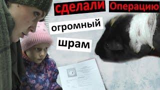 Наша морская свинка заболела 🏥 Коля - ДИКИЙ ФЭШН  ЕДИМ БУЛКИ Настя играет на фортепиано