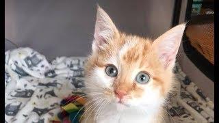 Sick Kitten Dropped Off In A Box